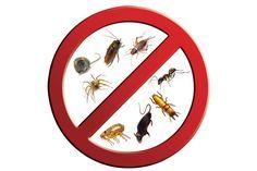 บริษัทกำจัดปลวก Mini Bug บริการ กำจัดปลวก