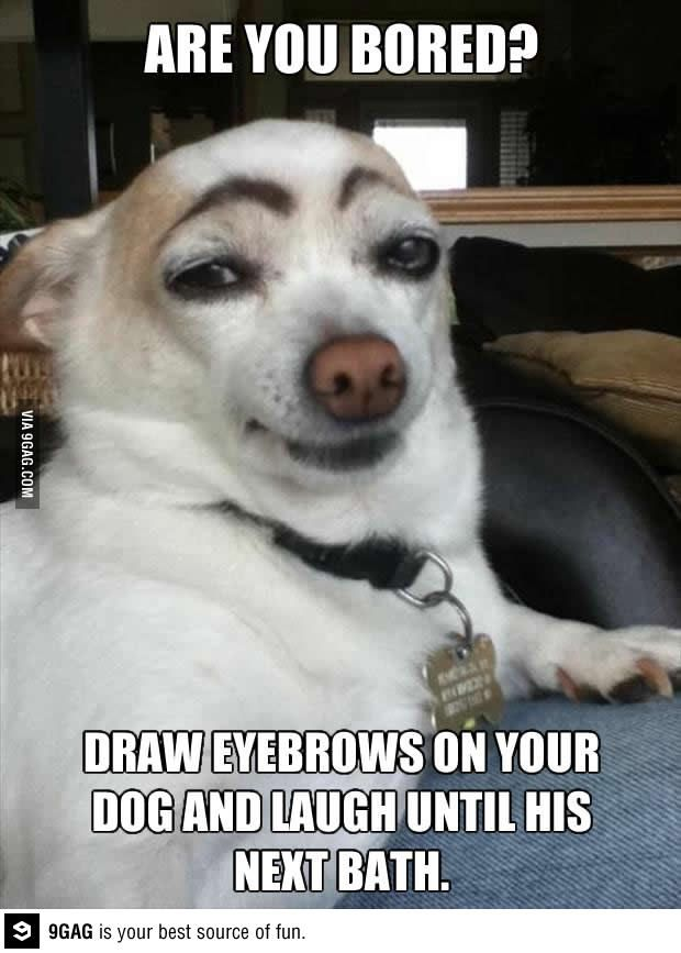Eyebrow Dog Humor With Dogs Pinterest Cas Eyebrows And Funny