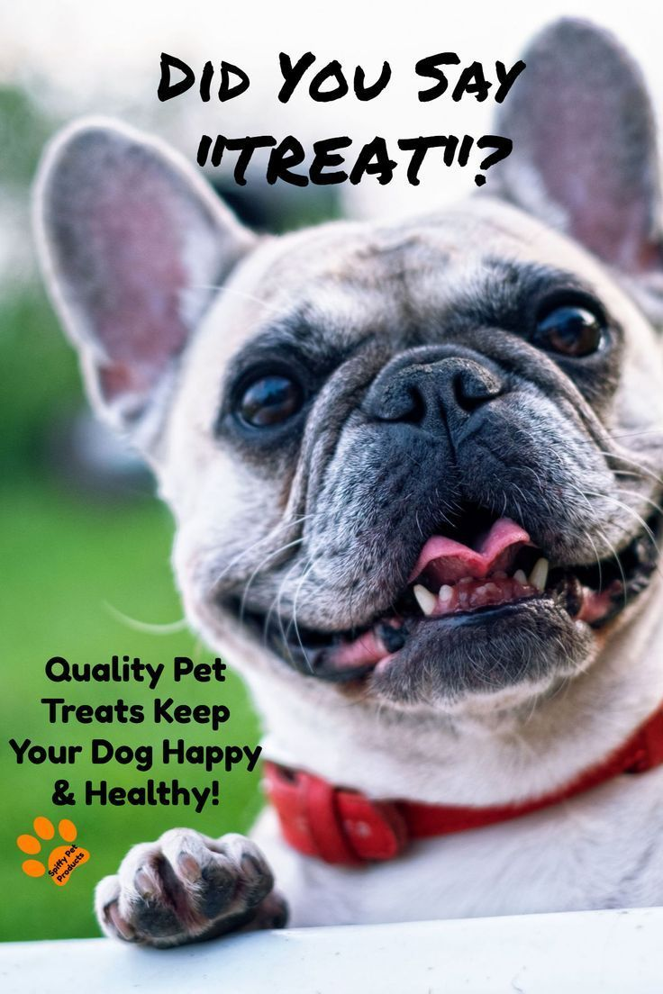 Healthy Dog Treats Puppers Go Nuts For Dog Clicker Training Dog