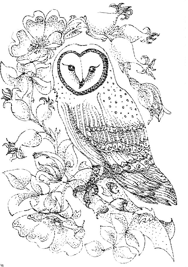 126 best iColor Owls images on Pinterest Owls Coloring books