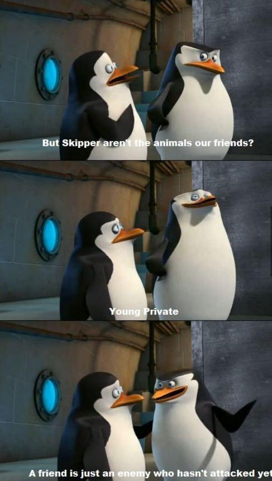 Penguins of Madagascar. A friend is just an enemy who hasn't attacked you yet. pinterest: ☞ katepisors