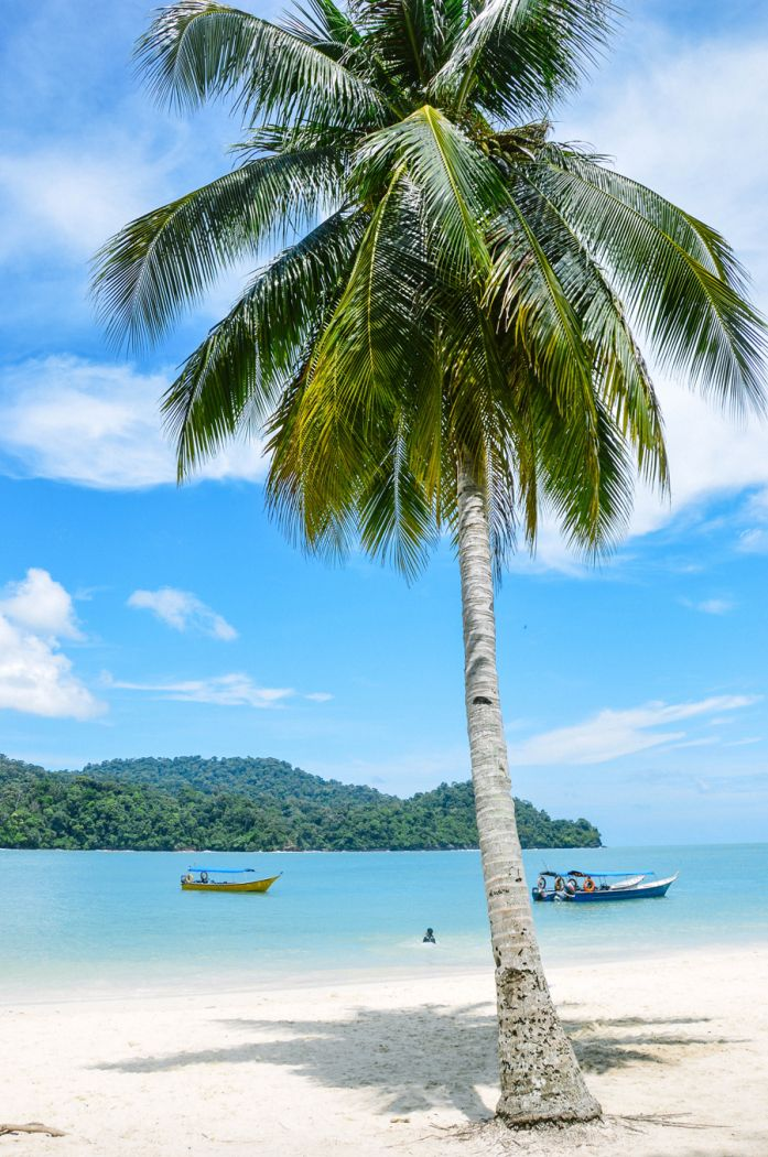 Palm Tree on the Beach in Malaysia | photography by http://kristinmock.com/