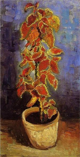 Coleus Plant in a Flowerpot, Vincent van Gogh, 1886