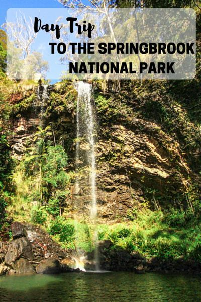 How to make the most of a Day trip to the amazing Springbrook National Park in Queensland, Australia