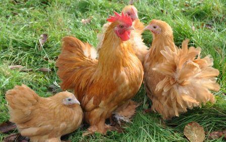 Pen Rhiw Garn Poultry Supplies