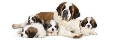 Resultado de imagen para perro cachorro