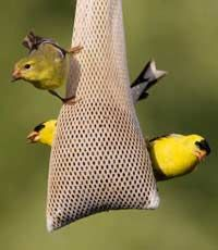 Make your own bird feeders  http://www.makingyourown.co.uk/make-your-own-bird-feeders.html