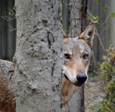 Modena un calendario con le immagini degli animali salvati dai volontari