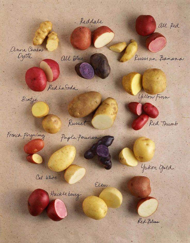 des patates, et encore des patates. Comment les faire pousser dans des pots