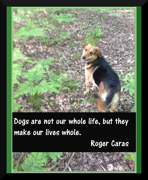 Quotation – Dogs, our best friends. on purelyhomespun.com