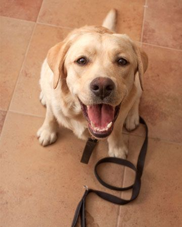 Best YouTube videos for dog training all you need are a computer and a leash- and of course, a dog!