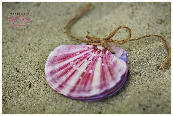Don't be a salad: QUICK AND EASY WAY TO CLEAN SEASHELLS