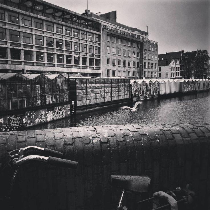"14 Me gusta, 1 comentarios - s.im (@sandra.im) en Instagram: ""#amsterdamcity #amsterdam #canal #bike #movement #bird #breeze #bnw #huaweip9"""