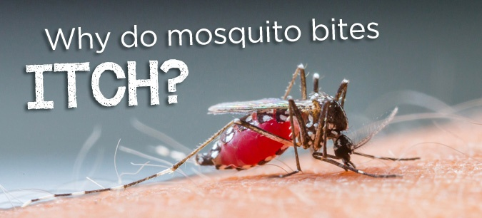 Just like with pollen, the answer involves histamines, your body's natural immune response to something foreign. #science #mosquitoes #insects