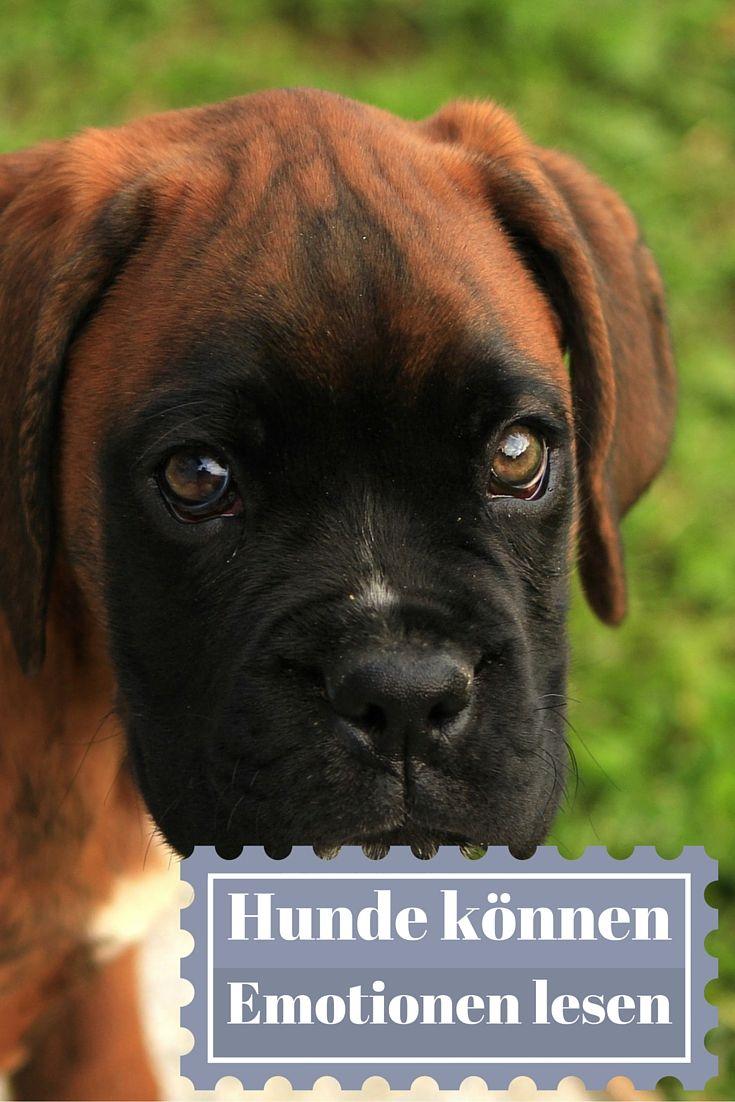 Emotionen Sind Für Hunde Auf Vielfältige Arten Zu Erkennen. Ein  Forschungsteam Fand Heraus, Dass Hunde Auch Aus Unseren Gesichtern Lesen  Können