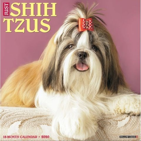Just Shih Tzus 2020 Calendar These Lively Little Dogs Seem To