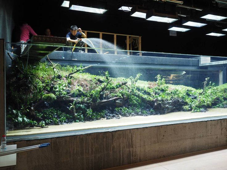 The Lisbon Aquarium Monster Tank Sunken Forest By