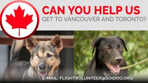 Flight volunteers wanted!  MacQueen and Ralecia have been adopted and are waiting to get to their forever home in CANADA. Please help us get them home!  If you are traveling FROM Thailand TO Vancouver or Toronto on BOOKED tickets with Thai Airways, All Nippon Airways (ANA), China Airlines, Qatar, Korean Air, JAL, EVA, Lufthansa or KLM, please EMAIL flightvolunteer@soidog.org for more information.  http://www.soidog.org/en/be-a-flight-volunteer