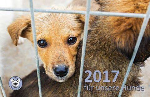 Unser ProDogRomania-Kalender 2017 ist ab sofort erhältlich! Auch in dieser Ausgabe findet ihr Eindrücke aus unseren Tierheimen, sowie Fotos von glücklichen Hunden, die es bereits in ein Zuha…