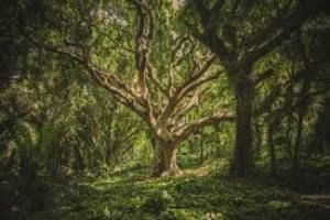 Complete Article on Forest. Short Essay and Paragraph on Importance of forest, significance of forest for children and students