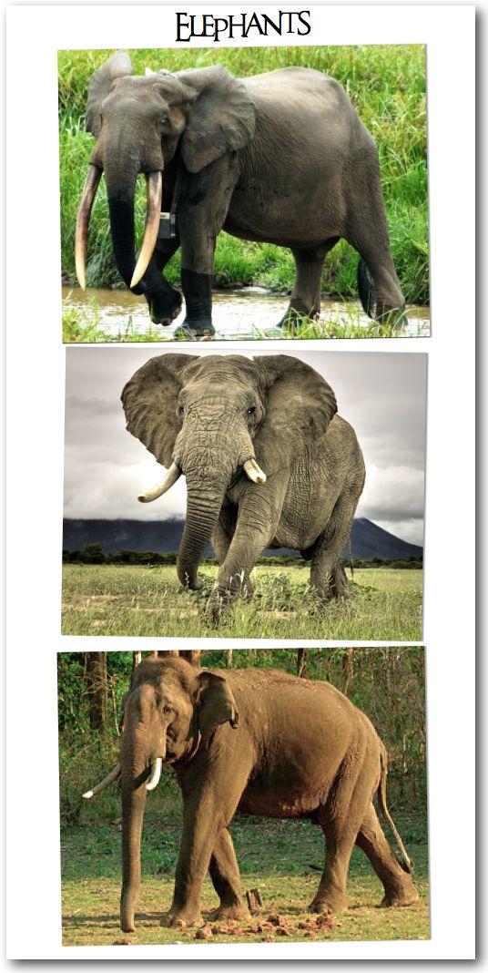 how to help asian elephants