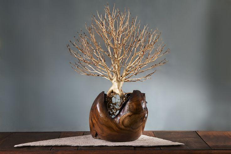 Ornament of little tree