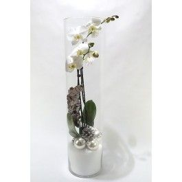 Witte Phalaenopsis orchidee voor de kerst in een hoge glazen vaas van 68 cm