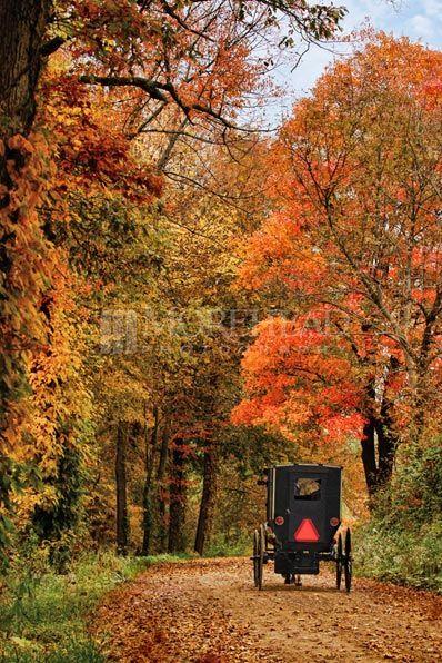 Fall Buggy, Amish Photos