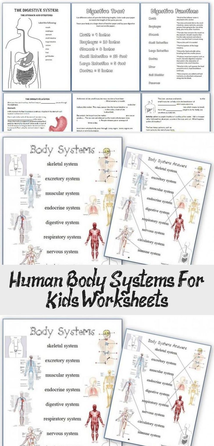 Human Body Systems For Kids Worksheets in 2020