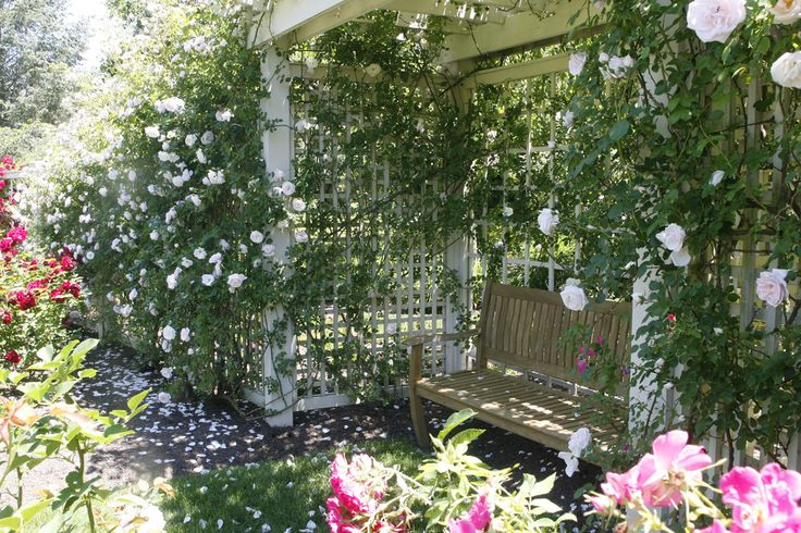 Backyard retreat...Cedar Benches, Benches Alcove, Climbing Rose Cov, Rose Arbors, Rose Cov Trellis, Good Book, Arbors I