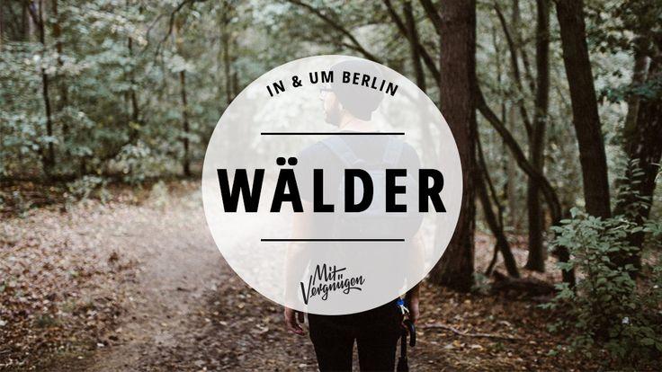 Wer dem ganzen Großstadttrubel mal entfliehen möchte, kann das in Berlin und Brandenburg auf rund 29.000ha Wald. Wir stellen euch 11 Wälder in Berlin vor.