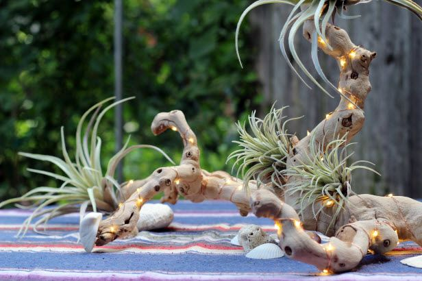 Summer Trend: Driftwood (http://blog.hgtv.com/design/2014/07/08/summer-trend-driftwood/?soc=pinterest): Centerpiece Ideas, Airplants, Diy Driftwood, Airplant Centerpieces, Driftwood Centerpieces, Driftwood Centerpiece 1, Illuminated Driftwood, Air Plants Driftwood, Design Blog