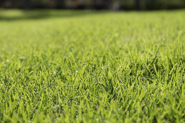 Skranter græsset i din græsplæne, mens mos og ukrudt har kronede dage, er det tid til at starte græs plænens foryngelseskur. Se her, hvad du skal gøre.