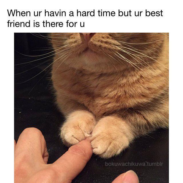 Cutesypooh Best Cat Memes Cute Funny Animals Cat Memes