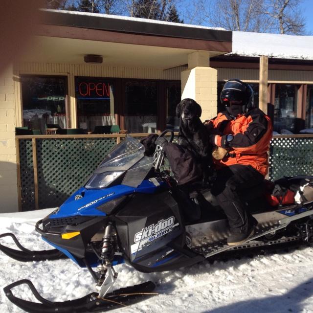 Dog on a sled! Nice!!!
