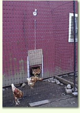 17 Best Images About Chicken Auto Door On Pinterest