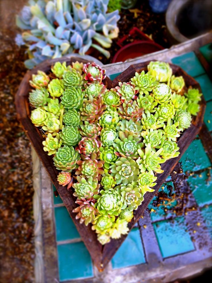 Succulent Heart wall art