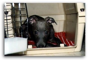 How to successfully crate train a puppy. The most helpful informative website I've found on it. So good.