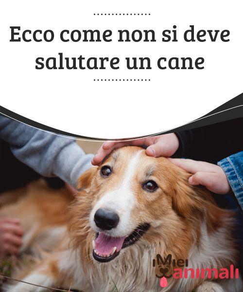 Ecco come non si deve salutare un cane Il linguaggio #corporale dell'essere #umano, può essere interpretato come una minaccia: una superficialità che a volte provoca che il cane morda. #Consigli