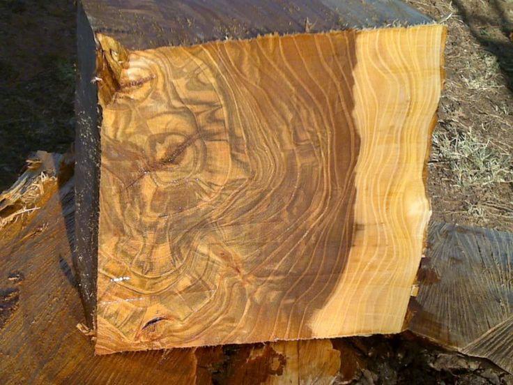 Chinese Elm Wood Species Wood Mint