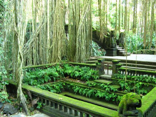 Sacred monkey forest, Ubud, Bali - reminds me of Jungle Book : )