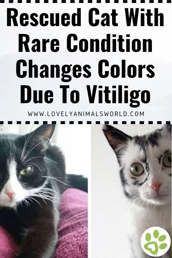 Cat With Rare Condition Changes Colors In Front Of Her Owner S Eyes Lovely Animals World In 2020 Cat Stories Cat Rescue Black And White Kittens