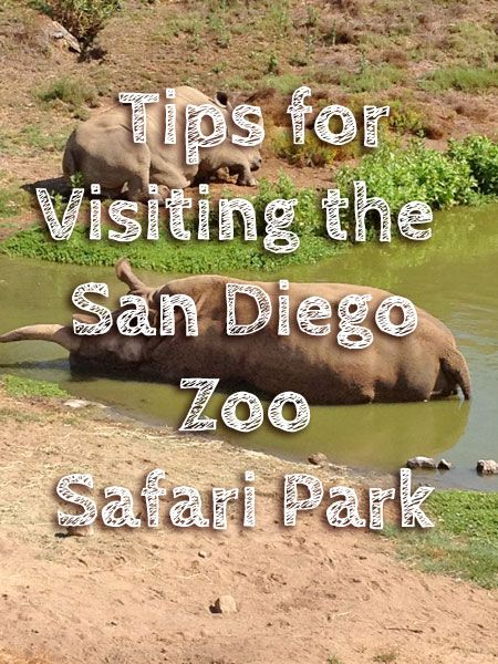 Tips for visiting the San Diego Zoo Safari Park - it's a must-do zoo!