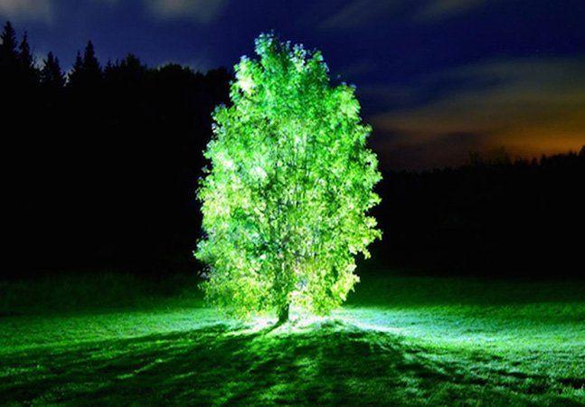 """Já ouviu falar em árvores com luzes,sem ser aquelas que usamos no Natal? Uma equipe de pesquisadores japoneses desenvolveu proteínas que produzem luz visível a olho nu, de acordo com um estudo publicado pela revista norte-americana Proceedings of the National Academy of Sciences.A ideia principal é substituir postes de luzes por árvores iluminadas para economizar energia elétrica. As proteínas, chamadas de """"nano-lanternas"""", liberam luzes de cores azul, amarela, laranja ou verde, dependendo…"""
