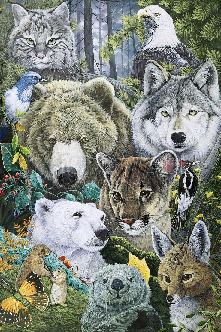 North America Animals - Tapetit / tapetti - Photowall