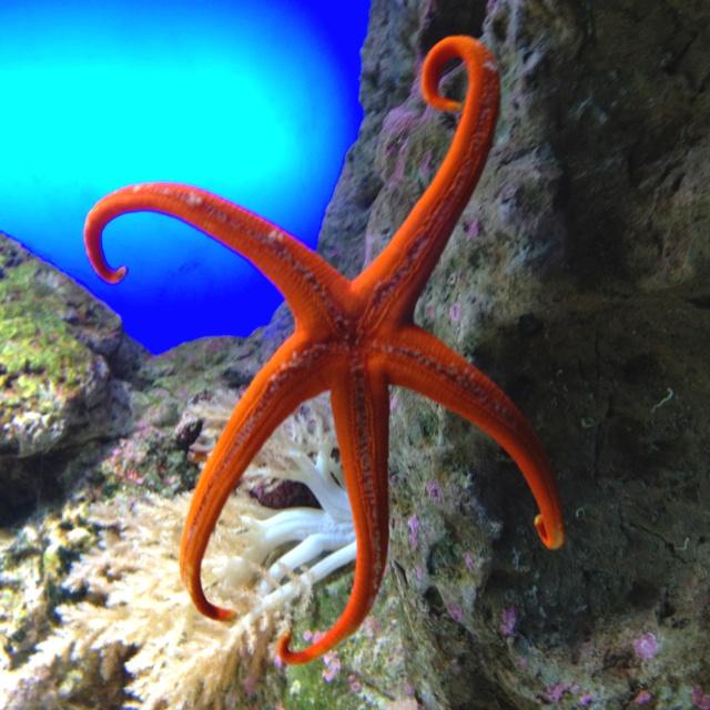 This is my starfish! :)