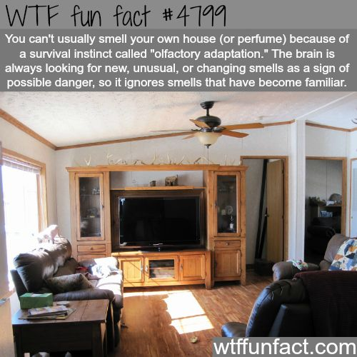 Why you can't smell your own house or perfume - WTF fun facts