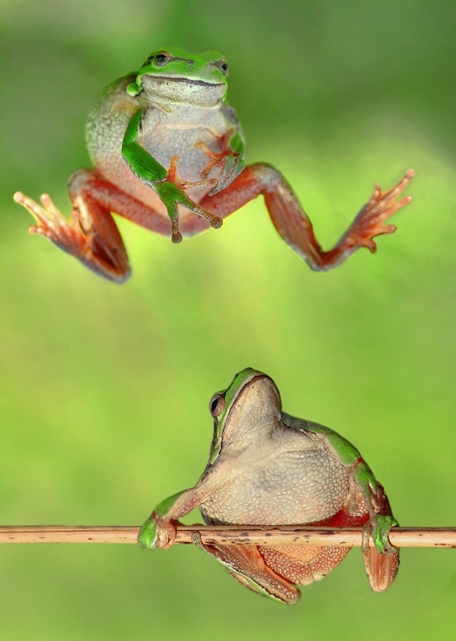 Leap frog so cute it looks like he's throwing up gang ...