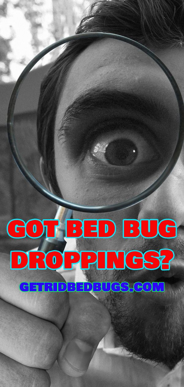 Bed Bug Droppings Gross Facts You Should Know in 2020