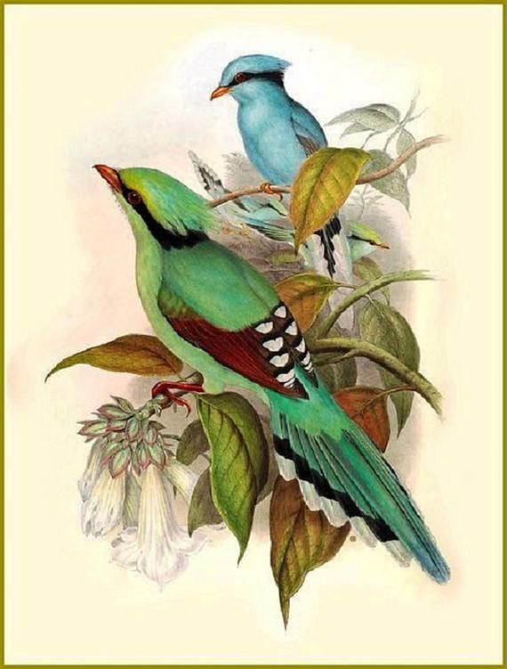 Blue and Yellow Macaw Bird By British Edward Lear Counted Cross Stitch Pattern